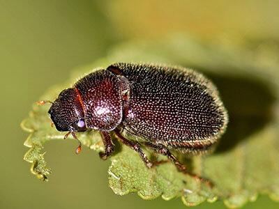 beetle plant biology living things