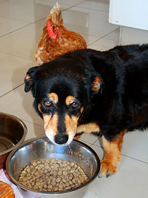 hypothesis dog eating food
