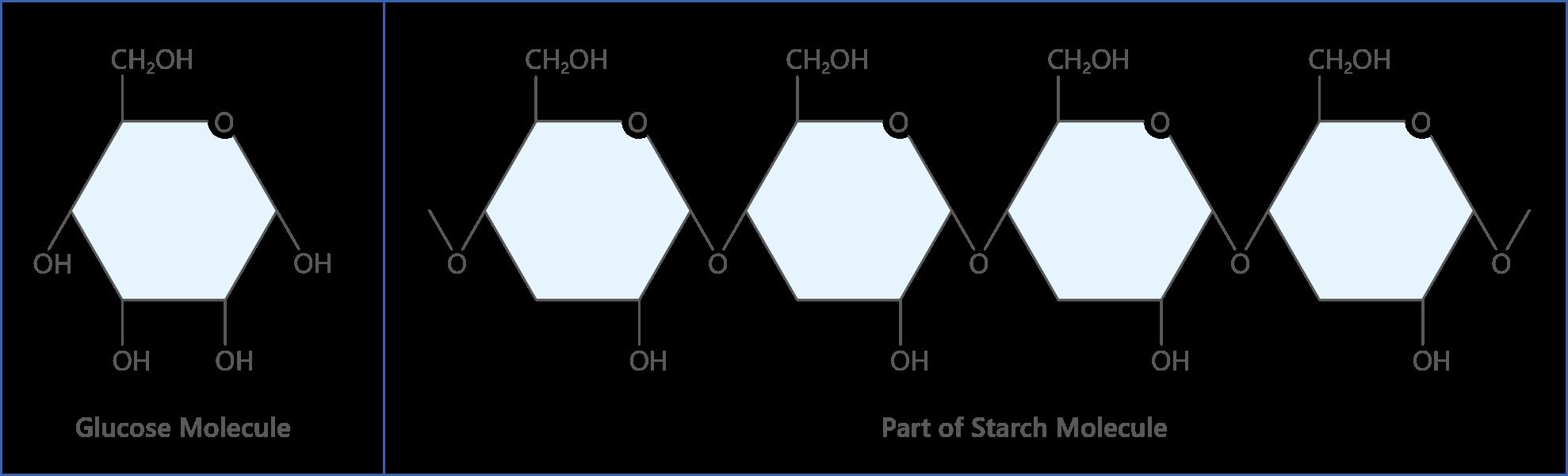 glucose starch molecules
