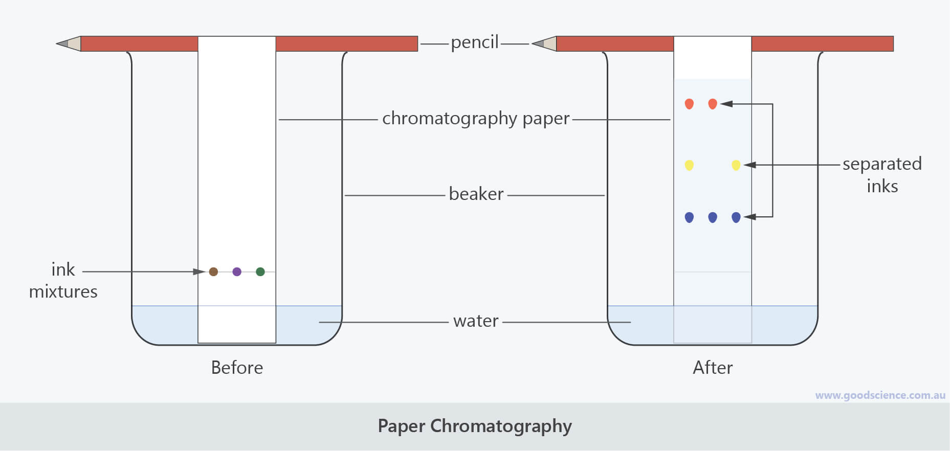 paper chromatography labelled scientific laboratory diagram