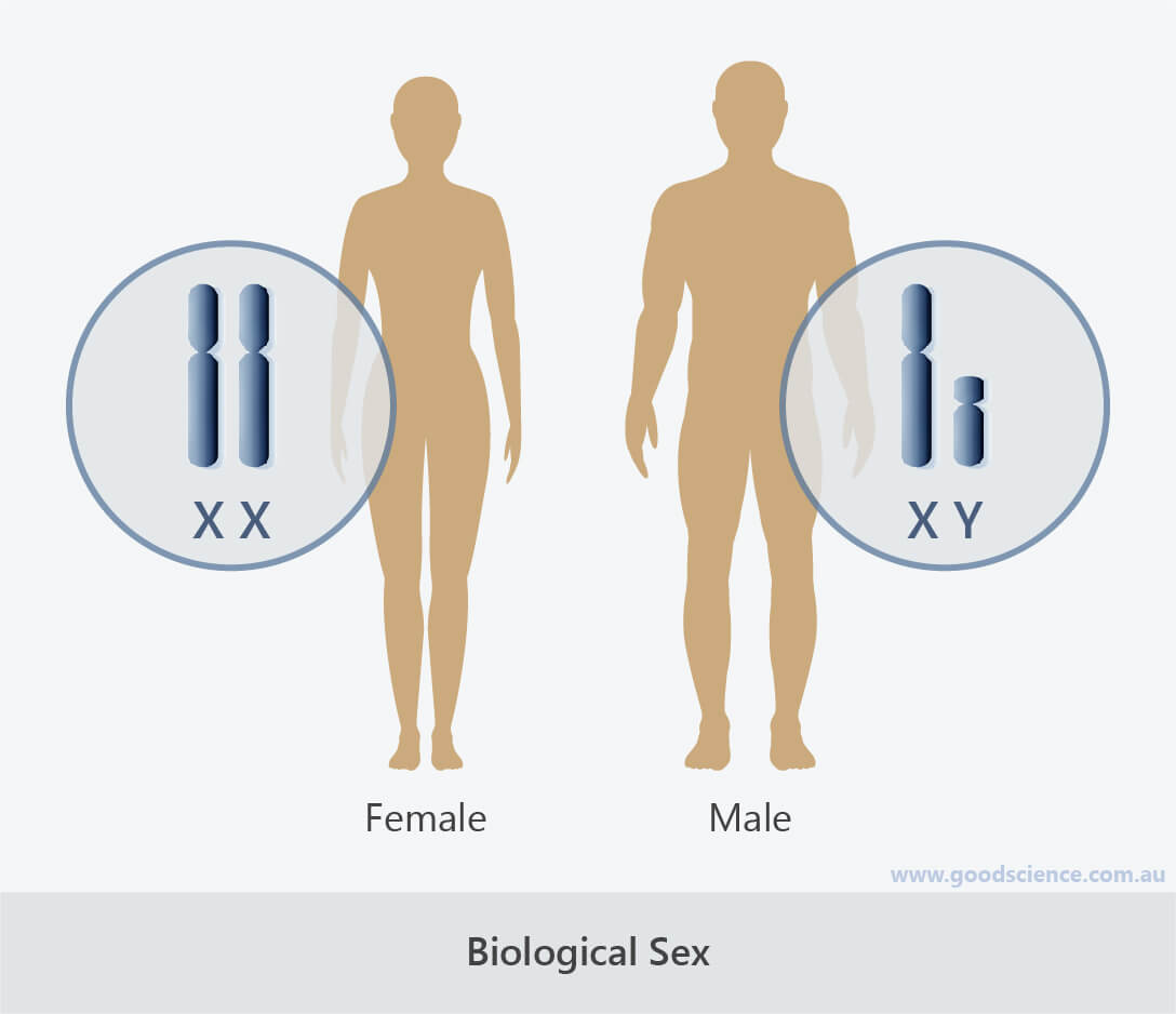 biological sex chromosomes xx xy