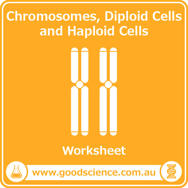 chromosomes diploid cells and haploid cells worksheet