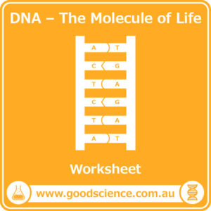 dna the molecule of life worksheet