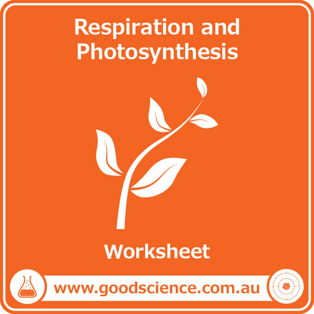 respiration and photosynthesis worksheet