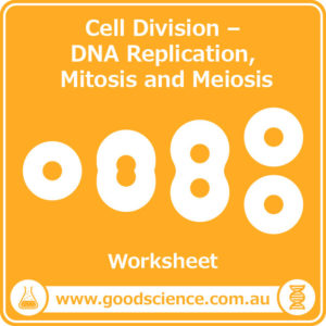 cell division dna replication mitosis meiosis worksheet