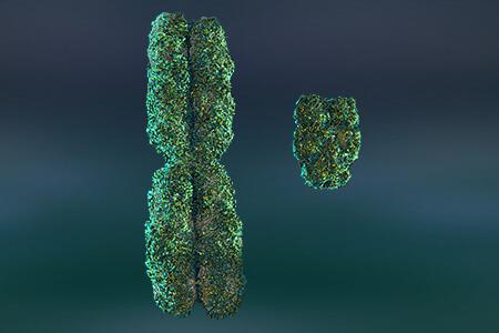 x and y chromosomes size comparison