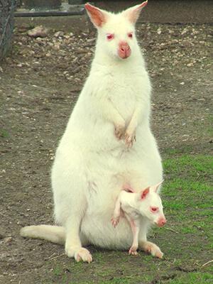 gametic germline mutation albinism