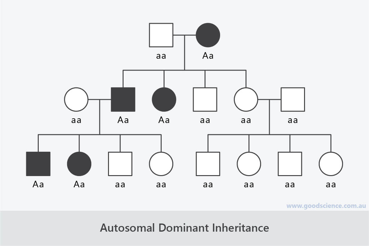 autosomal dominant inheritance pedigree