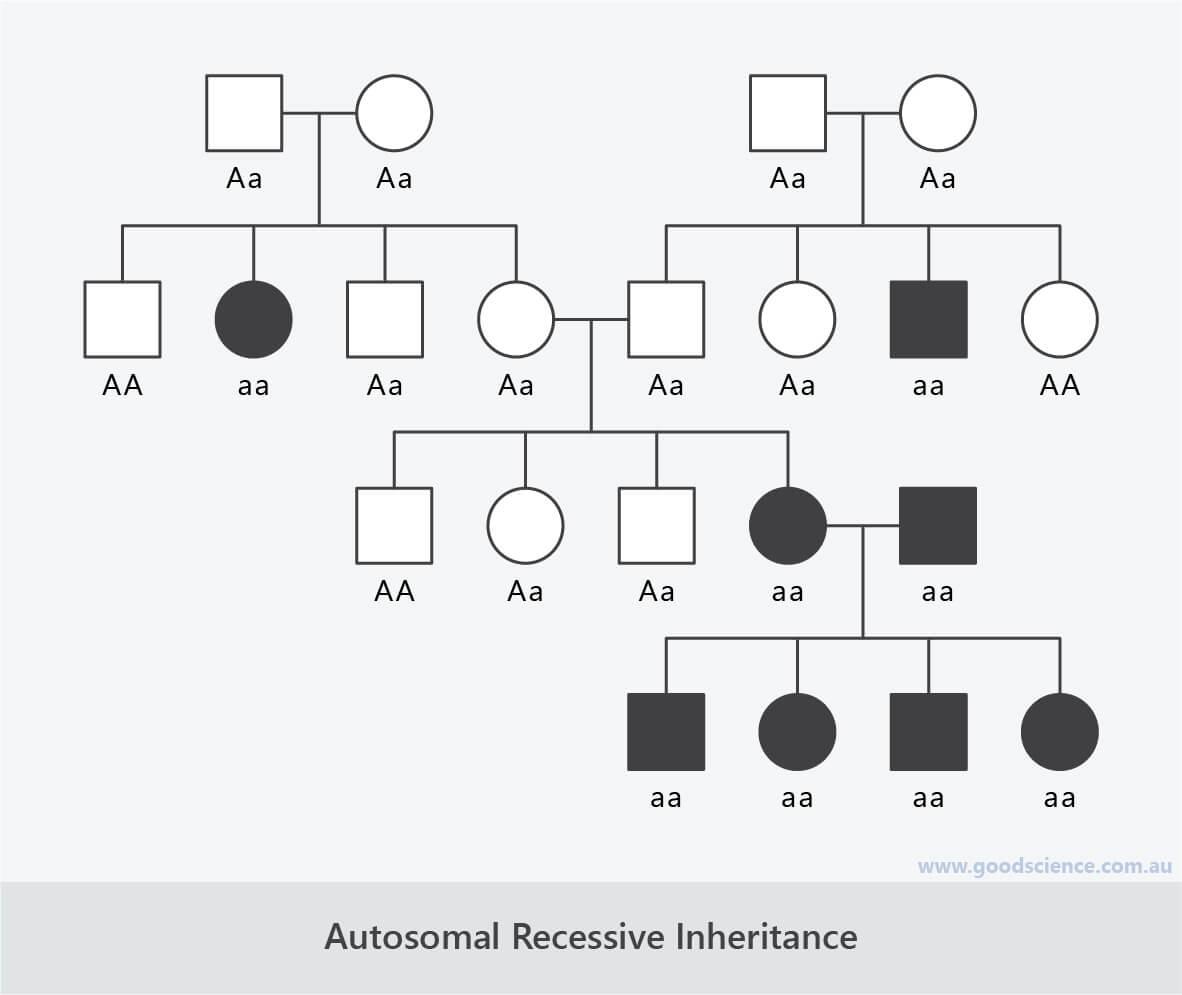 autosomal recessive inheritance pedigree