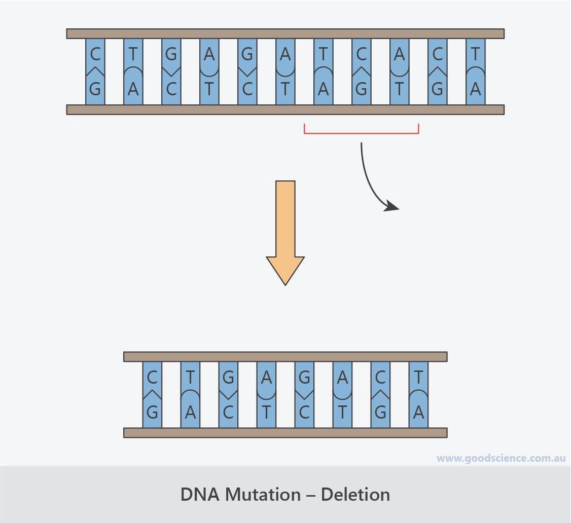dna frameshift mutation deletion