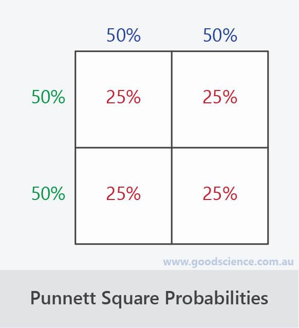 punnett square allele genotype probability