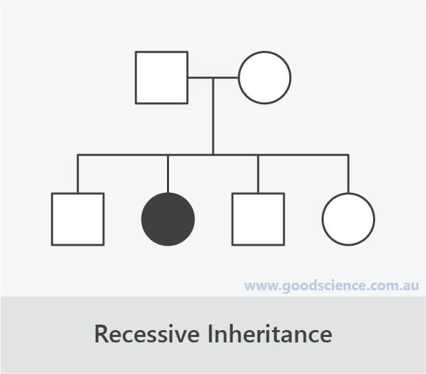recessive inheritance pedigree
