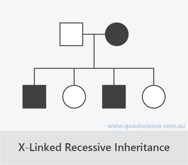 x-linked recessive inheritance pedigree pattern