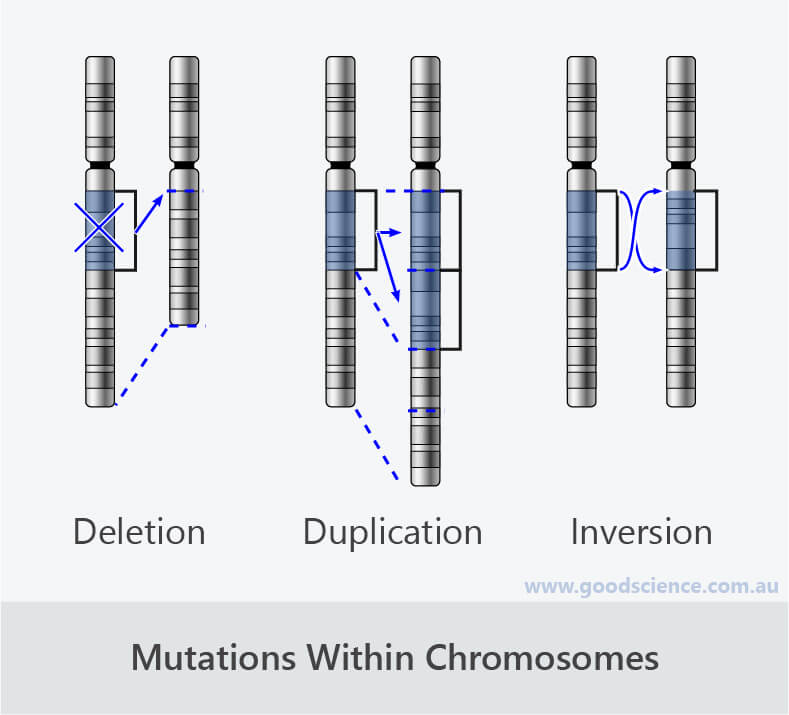 chromosomal mutation deletion duplication inversion