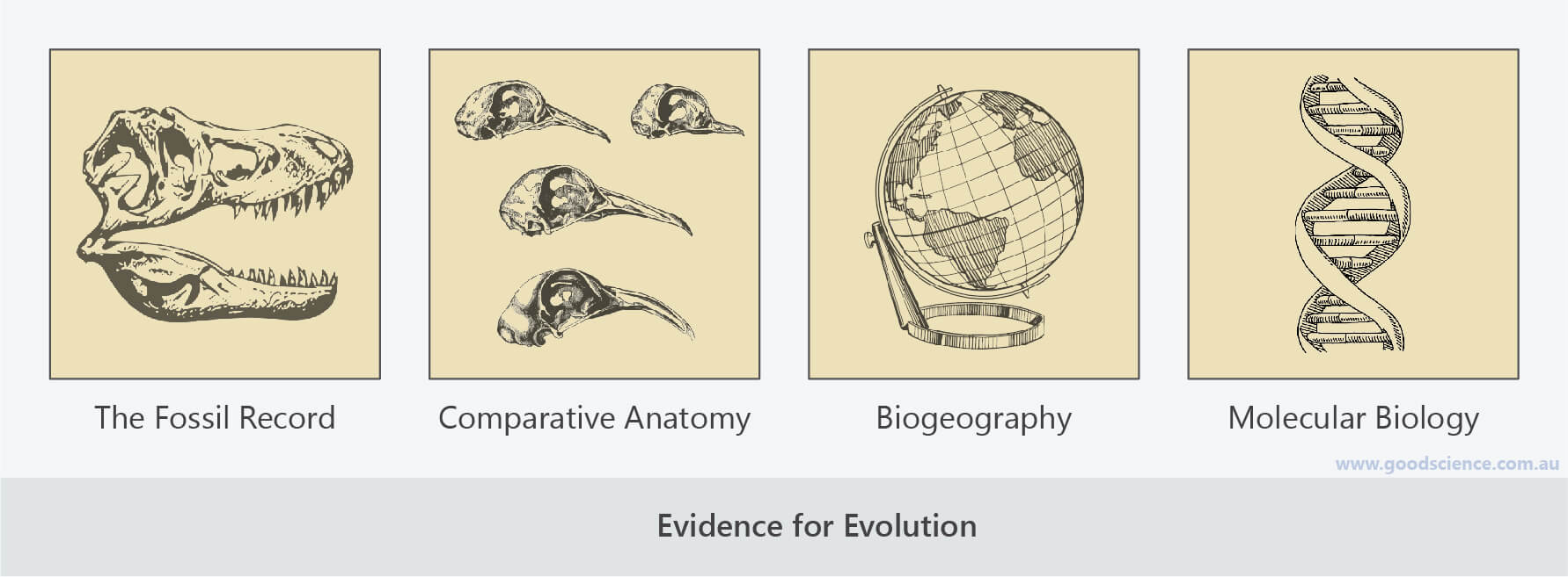 evidence for evolution fossil record comparative anatomy biogeography molecular biology