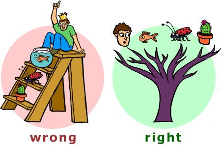 evolution misconception