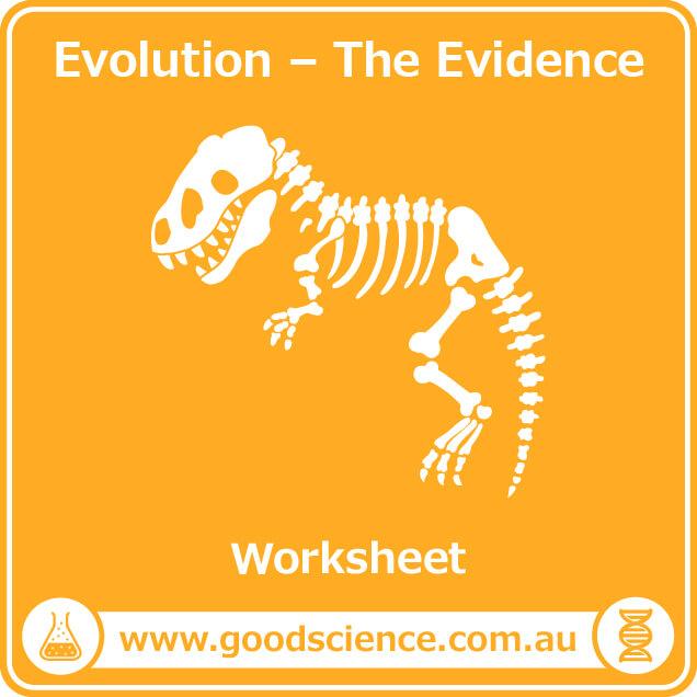 evolution the evidence worksheet