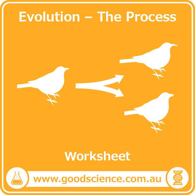 evolution the process worksheet