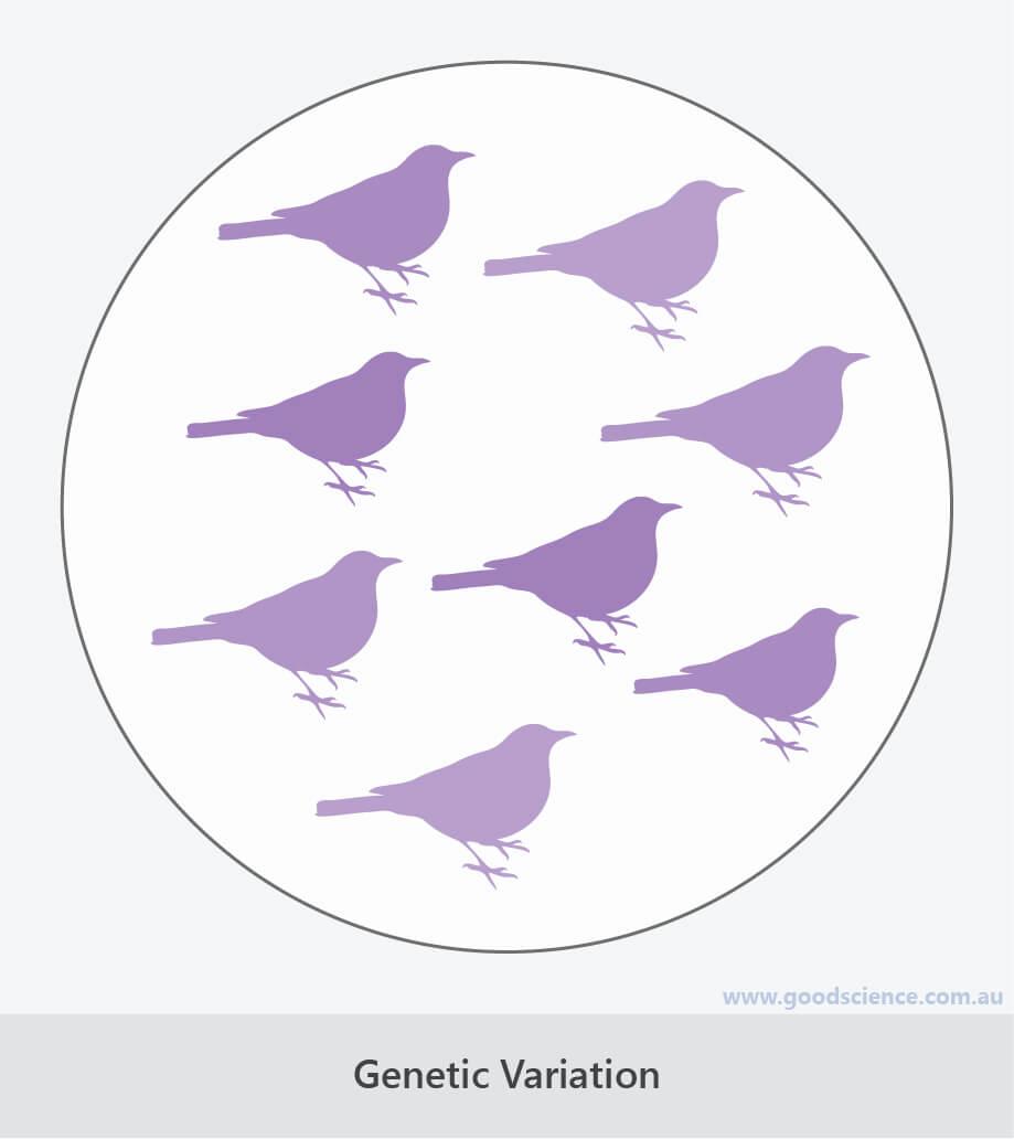 genetic variation evolution