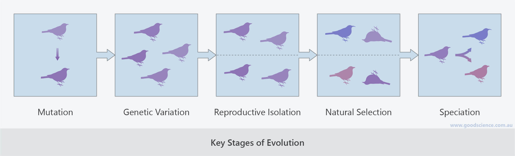 key stages of evolution